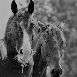 Best Friends by Linda    L Tatler - Black & White Animals (  )