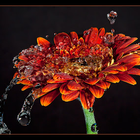 splash by Curtis Jones - Nature Up Close Flowers - 2011-2013