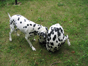 Photo: Hundesport