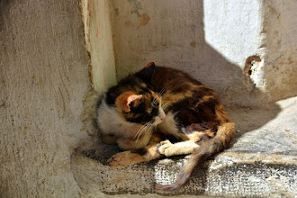 Photo: The national pet - there are no rodents in the medina for obvious reasons