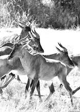 Photo: Mokala National Park 23-29 August 2010