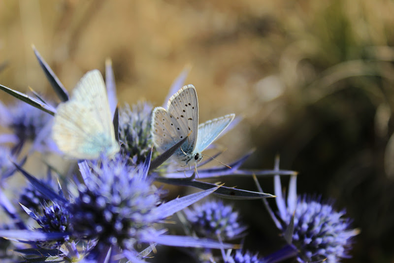 Rhapsody in Blue di Carmen_amoroso