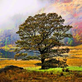 Lone Tree at Blea Tarn by Steve BB - Nature Up Close Trees & Bushes ( cumbria, tree, fog, autumn, blea tarn, lakes, golden, mist )