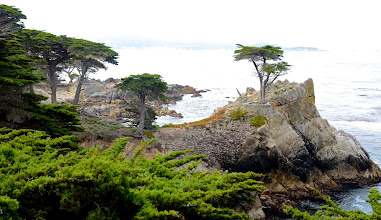 """Photo: 74. And, ah, yes, the famed """"Lone Cypress"""" (off to the right), one of the most photographed trees in the world. It's over 250 years old and is a symbol for the whole area. The cypress trees in this area of the drive were just gorgeous! They alone are worth the cost."""