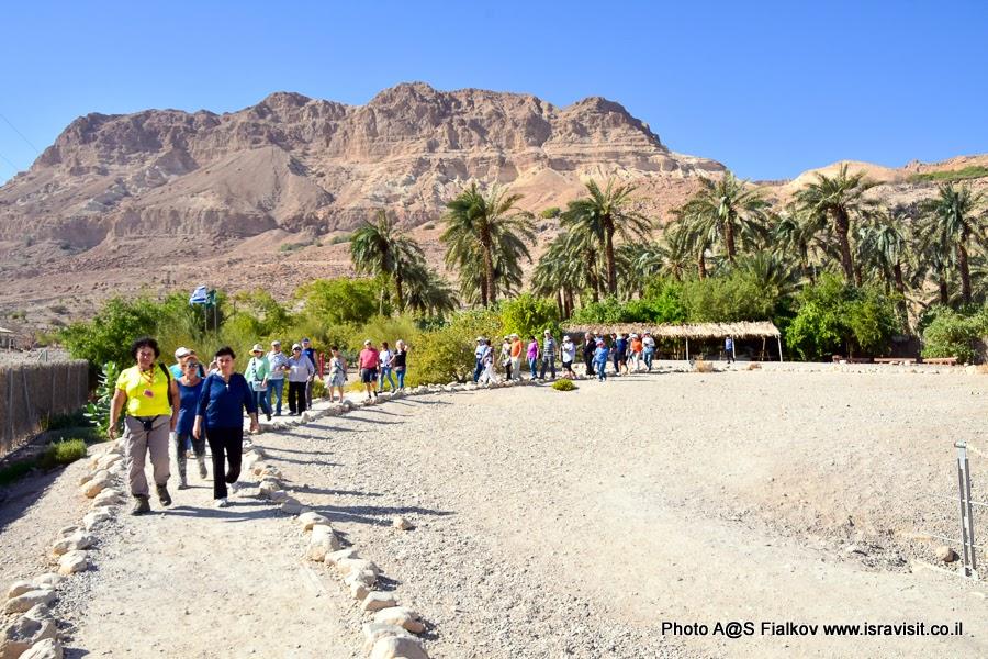 Экскурсия гида в Израиле Светланы Фиалковой. Эйн Геди. Иудейская пустыня у берегов Мертвого моря.