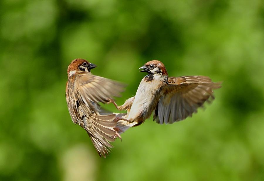 by Sabdo Bintoro - Animals Birds