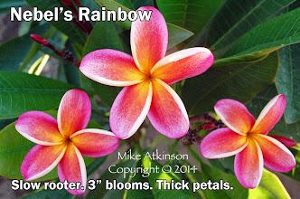 Photo: Nebel's Rainbow - San Diego, CA - East San Diego county