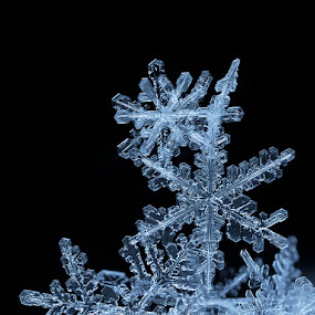 Snowy kingdom by Tomáš Celar - Nature Up Close Water ( canon, tomáš, celar, snowflake, frozen, macro, winter, cold, blue, flake, ice, snow, black )