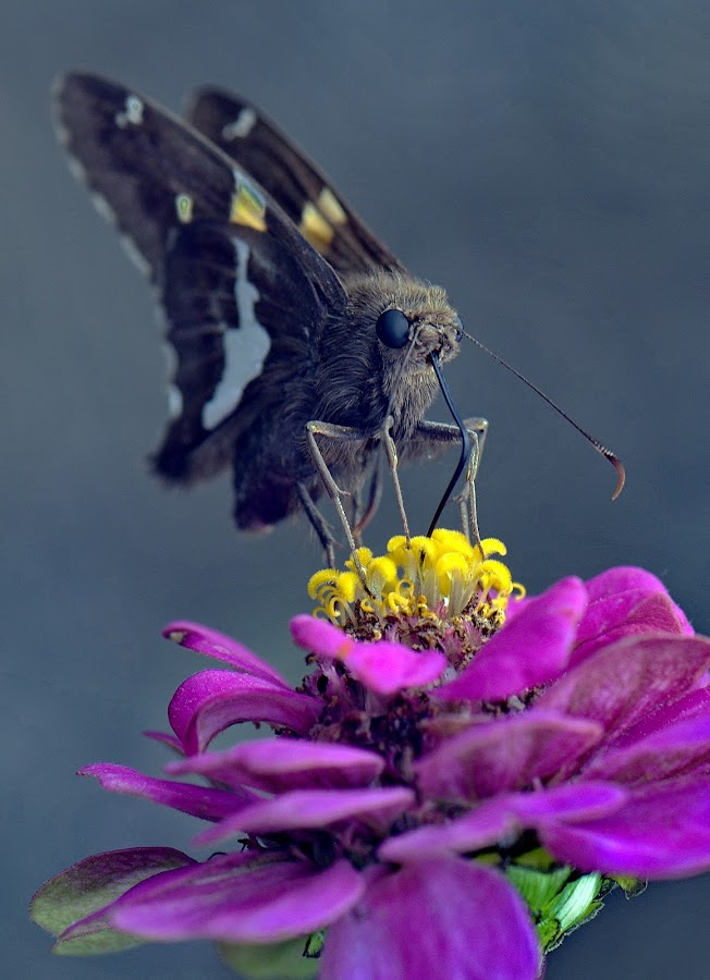 Yummie Nectar by Andrew Halpern - Animals Insects & Spiders