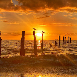 Sunbeams and Sunsets by Lorna Littrell - Landscapes Sunsets & Sunrises ( waterscape, sunset, beach, sea and sand, silhouette, birds )