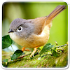 Birds Live Wallpaper APK Icon