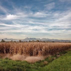 Corn field by Jernej Lah - Landscapes Prairies, Meadows & Fields ( field, mountains, kolesarjene, barje, ljubljana, corn )