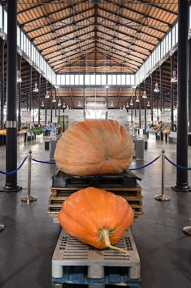La calabaza gigante pesa 456 kilos.