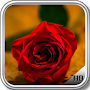 Red Roses Wallpaper APK icon