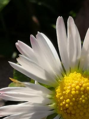 Inizia la primavera di patsie_1506