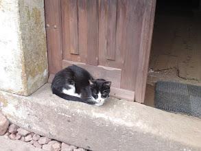 Photo: Kot Filuś na progu domu