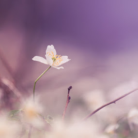 Peaking by Sergei Pitkevich - Nature Up Close Flowers - 2011-2013