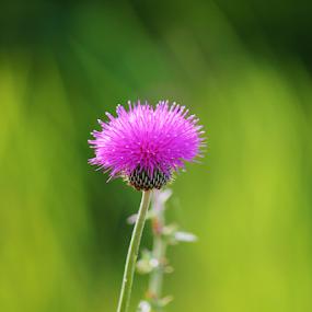 by K Dawn McDonald - Flowers Single Flower