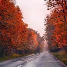 by Manuela Dedić - Landscapes Forests (  )