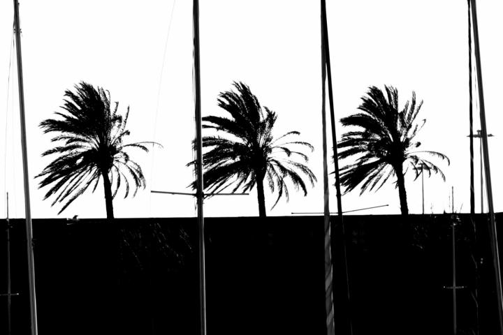 Palme e alberi maestri di anser