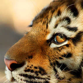 Simsa's Profile by Amanda Westerlund - Animals Other Mammals