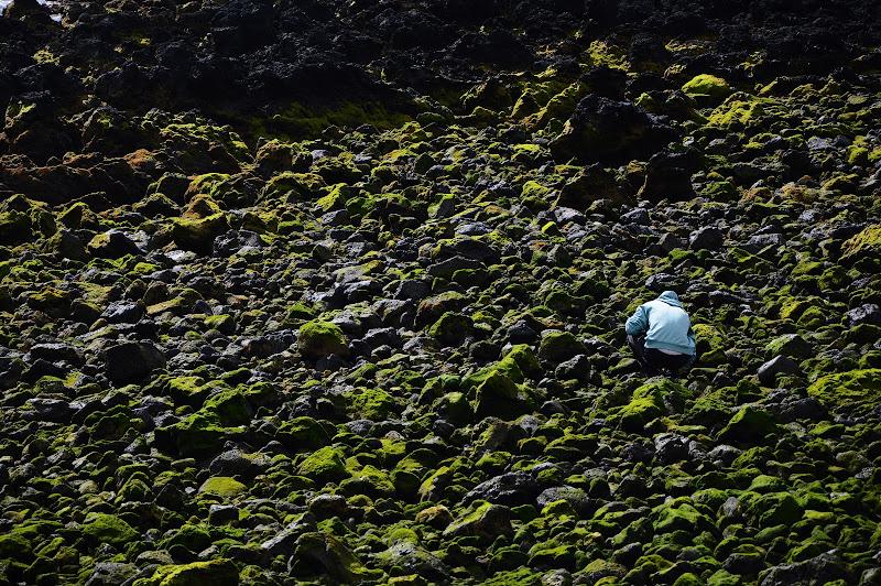 Intruso della bassa marea di alesutto