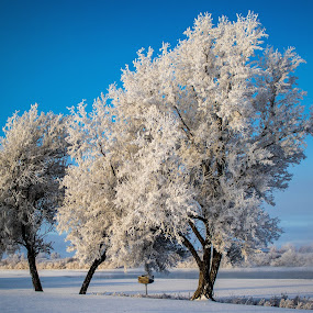 Frosted Trees with fog in the background by Chad Roberts - Nature Up Close Trees & Bushes ( water, winter, snow, snake river, frost, trees, frozen,  )
