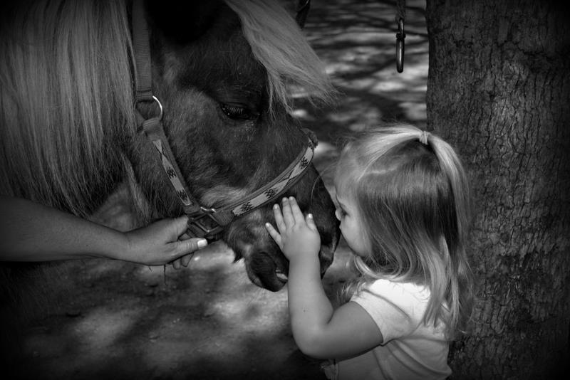 She LOVES smokey :) by Chrissy Mitchell - Animals Horses