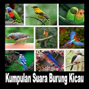 Kumpulan Suara Burung Kicau