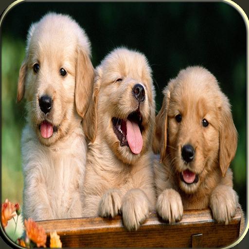 Puppy Keyboard LOGO-APP點子