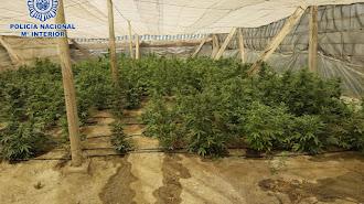 Plantación descubierta en Matagorda.