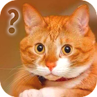 Ask Cat Speak Simulator icon
