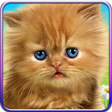 Talking baby cat. file APK Free for PC, smart TV Download