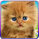 Talking baby cat. APK
