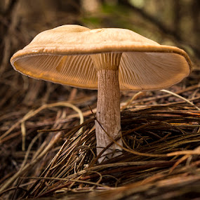 Umbrella by Roger Fanner - Nature Up Close Mushrooms & Fungi