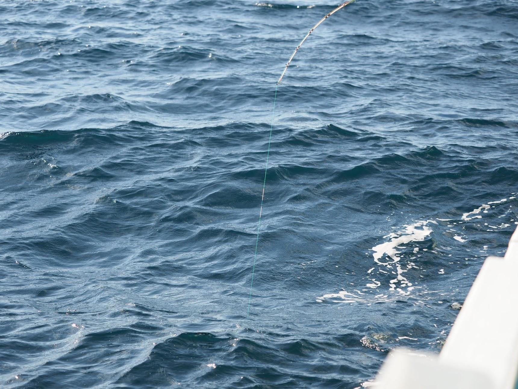 ヒラメがかかった竿