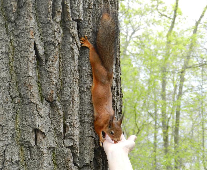 Friendship in the woods di Aua