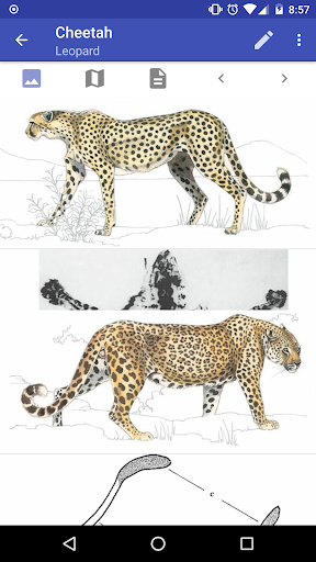 Mammals of the Southern African Subregion screenshot