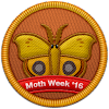 Moth Week 2016