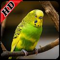 Parakeet Bird Sounds : Budgerigar Sounds icon