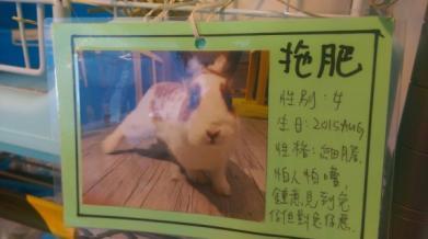 C:\Users\loverabbit\Desktop\港澳\香港兔子餐廳\新增資料夾\IMAG2536.jpg