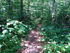 Photo: A pretty level trail brings us back to the car on a nice loop.