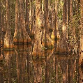 by Patti Reddoch - Landscapes Waterscapes