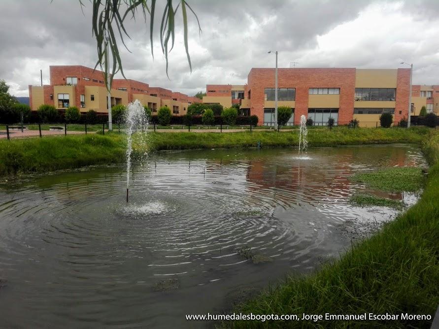 Humedal Mora verde