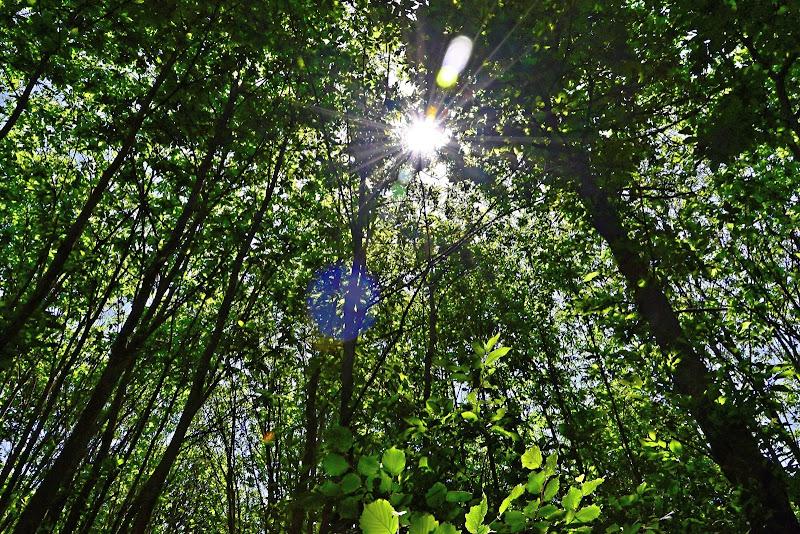 nel bosco di GVatterioni