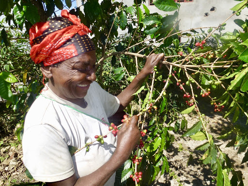Gender equity in the Democratic Republic of Congo's coffee sector