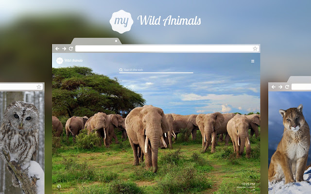Explore The Animal Planet Be Drawn To Untamed World Of Wild Animals Reconnect Nature Install This New Tab For Chrome