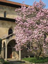 Photo: Martinskirche Neckartailfingen: Südlicher Eingang mit Brautportal von 1470; die Magnolie wurde ca. 1900 gepflanzt.