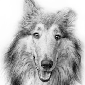 Jesse by Ian McConnell - Animals - Dogs Portraits