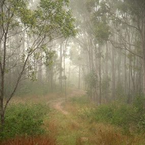 by David Davies - Landscapes Forests (  )